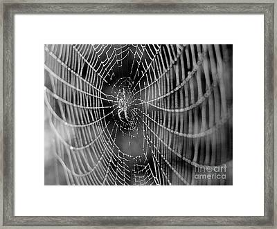 Spider In A Dew Covered Web - Black And White Framed Print