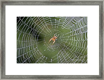 Spider In A Dew Covered Web Framed Print