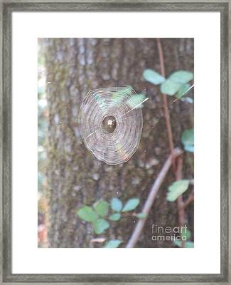 Framed Print featuring the photograph Spider In The Round by Marie Neder