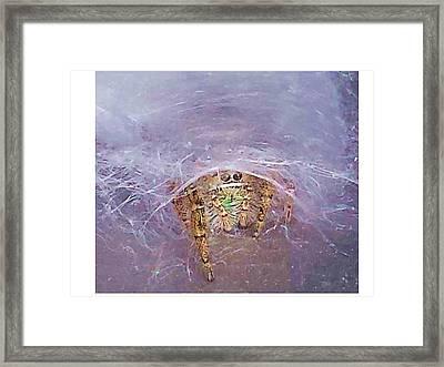 Spider Framed Print by Joanne Elizabeth