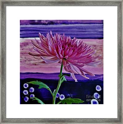 Framed Print featuring the photograph Spider Mum With Abstract by Marsha Heiken
