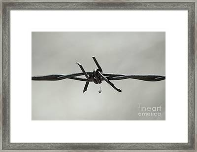 Spider On Barbed Wire In Black And White Framed Print