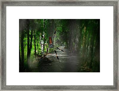 Framed Print featuring the photograph Spider Road by Harry Spitz