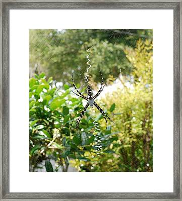 Spider Signals Framed Print by Bea Godwin