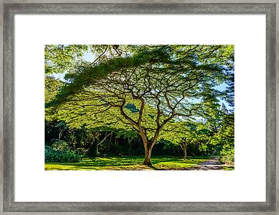Spider Tree Framed Print