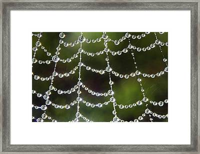 Spider Web Decorated By Morning Fog Framed Print
