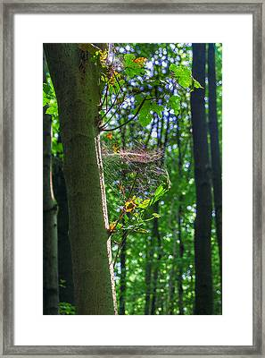 Spider Web In A Forest Framed Print