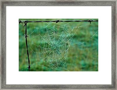 Spider Web In The Springtime Framed Print by Douglas Barnett