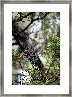 Framed Print featuring the photograph Spider Web In Tree by Willard Killough III