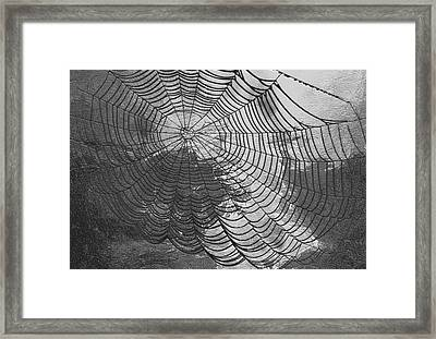 Spider Web Framed Print