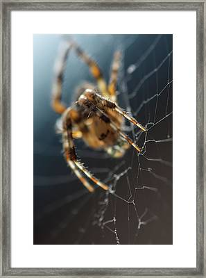 Spider Web Light Framed Print by Irina Safonova