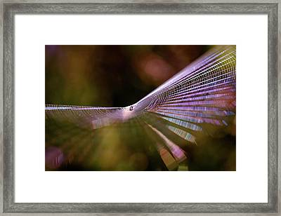 Spider Web Rainbow Magic Framed Print by Roeselien Raimond