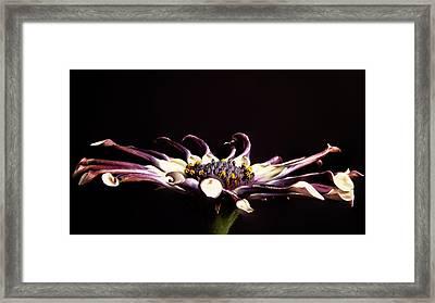 Spider White Framed Print