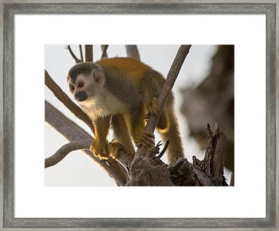 Spiderman Framed Print by Betsy Knapp
