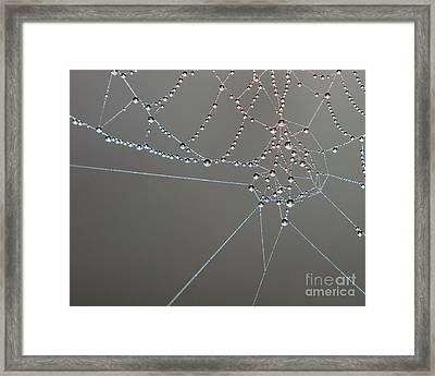 Spiders Intricate Work Framed Print by Lloyd Alexander