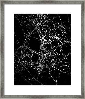 Framed Print featuring the photograph Spiderweb No 4 by Brian Carson
