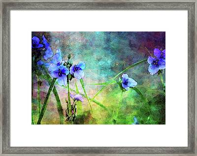 Spiderwort Dance 0115 Idp_2 Framed Print