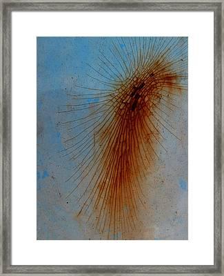 Spidery Framed Print by Elizabeth McPhee