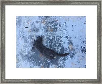 Spidey Framed Print by M Stuart