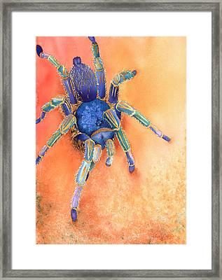 Spidy Framed Print