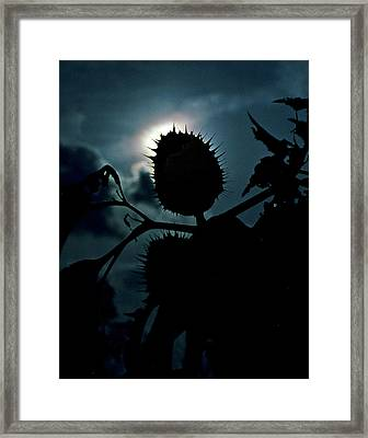 Spike Seed Pod Framed Print by Dave Chafin