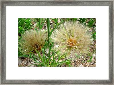 Spike Sphere Framed Print by Gretchen Wrede