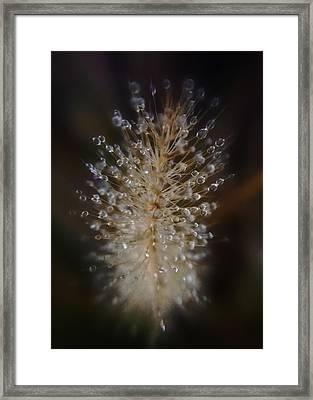 Spiked Droplets  Framed Print