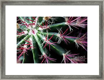 Spikes Framed Print