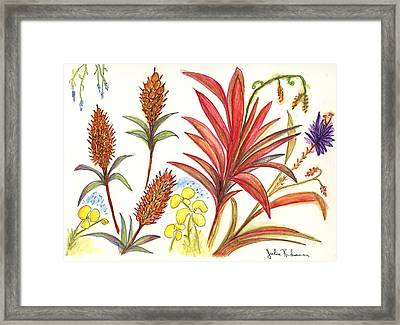 Spiky Florida Flowers Framed Print by Julie Richman