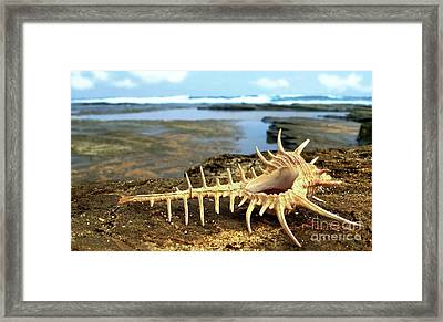 Spiky Shell Framed Print by Kaye Menner