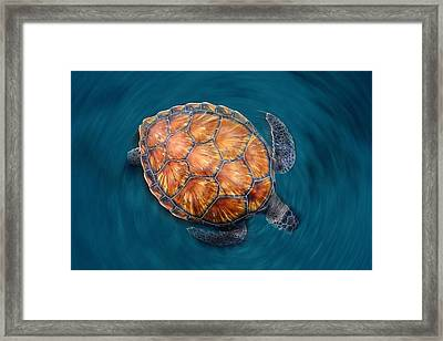Spin Turtle Framed Print by Sergi Garcia