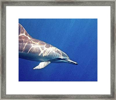 Spinner Dolphin Framed Print by Bette Phelan