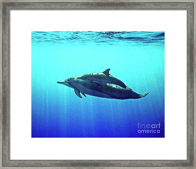 Spinner Dolphin With Baby Framed Print by Bette Phelan