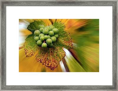 Spinning Grapes Framed Print