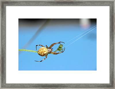 Spinning The Web Framed Print