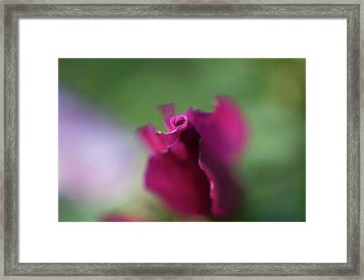 Spinning With Rose 2 Framed Print