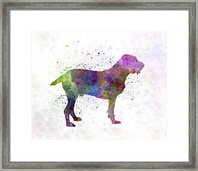 Spinone In Watercolor Framed Print