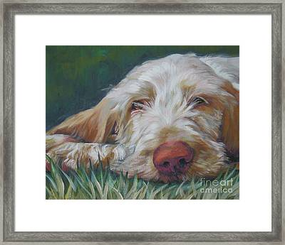 Spinone Italiano Orange Framed Print