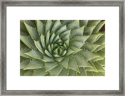 Spiral Aloe Santa Cruz California Framed Print by Sebastian Kennerknecht