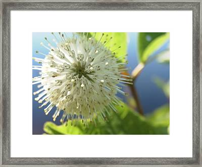 Framed Print featuring the photograph Spiral Beauty by Martha Ayotte