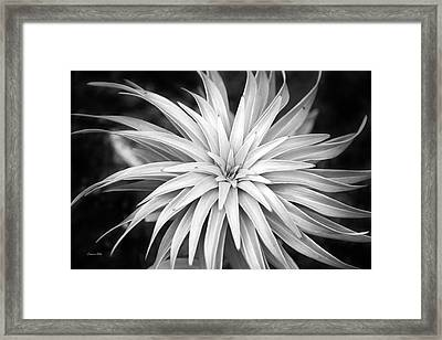Framed Print featuring the photograph Spiral Black And White by Christina Rollo