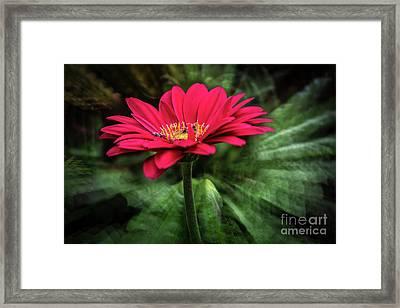 Spiral Pink Flower Focus Framed Print