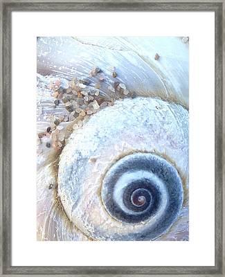 Fibonacci In Blue - Spiral Shell Framed Print by Sylvie Marie