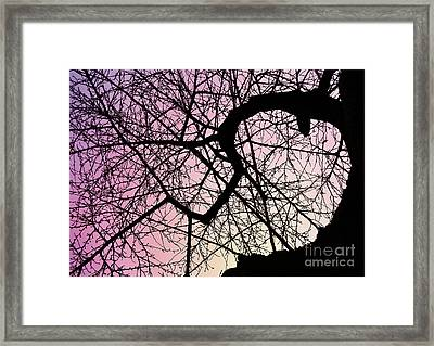 Spiral Tree Framed Print