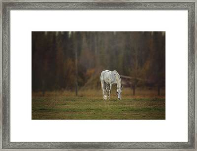 Framed Print featuring the photograph Spirit Horse by Debby Herold