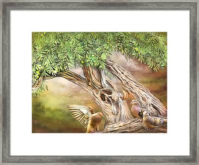 Spirit In The Olive Tree Framed Print