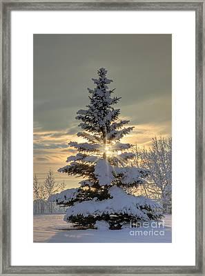 Spirit Tree Framed Print by Brad Allen Fine Art