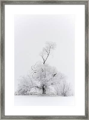Spirit Tree Framed Print by Dustin LeFevre