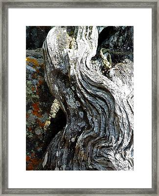 Spirit Tree Root Framed Print by Patricia Bigelow