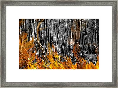 Spirits Of The Firestorm Framed Print by Diane C Nicholson